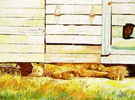Mr. Pudd E. Katt's Afternoon Nap
