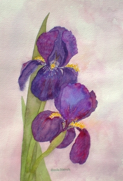 Irises.GlendaDietrichMoore